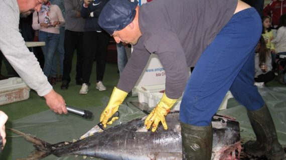 Las IX Jornadas Gastronómicas de Corteconcepción acercan el ronqueo del atún a la Sierra