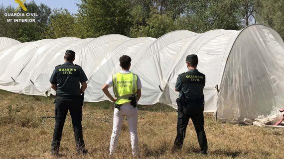 Detenidos tres varones por cultivar marihuana en una finca privada de Almonte