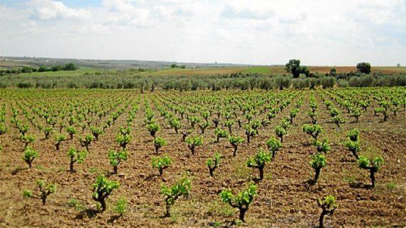 Vinos de Huelva y embutidos de Málaga, protagonistas en 'Tierra y Mar'