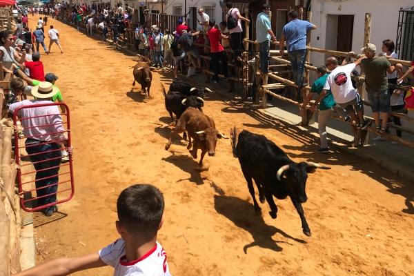 Tras las capeas, la procesión de San Juan Bautista pone el broche mañana a las fiestas patronales sanjuaneras