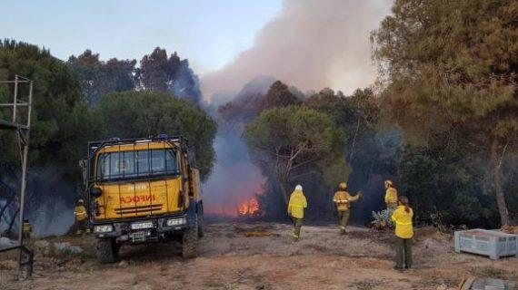 Controlado el incendio del Estero Domingo Rubio, que ha afectado a Moguer y Palos