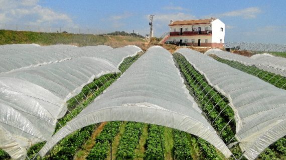 Asaja aclara que el sector agrícola continúa trabajando para garantizar el abastecimiento de alimentos a la sociedad