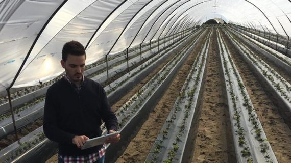 El ingeniero moguereño Daniel Márquez crea una app para controlar los cultivos a través del móvil