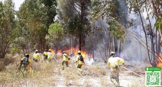 Controlado un incendio forestal registrado este jueves en Los Pinos de Valverde