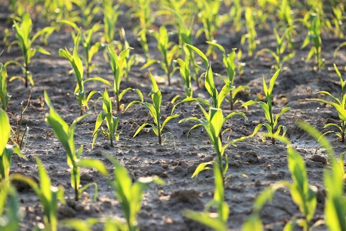 Huelva recibirá más de 4,4 millones de euros para el Plan de Fomento de Empleo Agrario (PFEA)