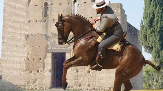 San Bartolomé de la Torre abre sus puertas a los amantes del caballo con el IV Concurso Nacional B de Doma Vaquera