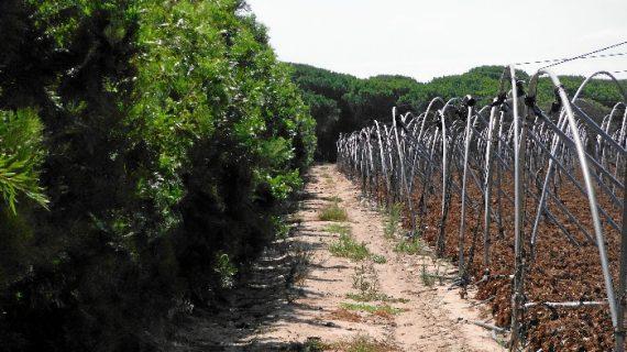 Convivencia de los sectores agrícola e industrial de Huelva a través de una pantalla vegetal