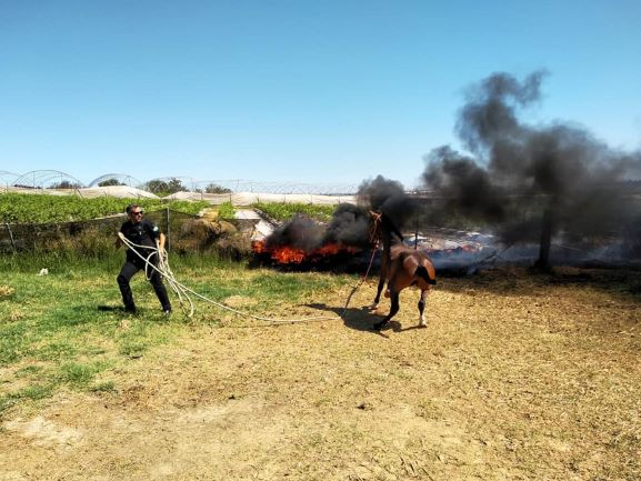 Salvan a dos equinos de una finca en la que se generó un incendio en Lepe