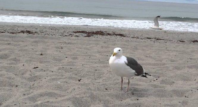 'El Gaviota' denuncia a un bañista de la playa por una posible intoxicación alimentaria grave