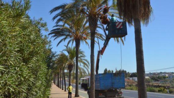 Comienza un nuevo plan de fumigación para los árboles de Palos de la Frontera