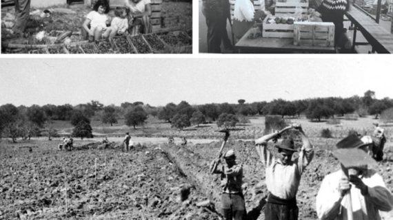 La Comunidad de Regantes Palos de la Frontera busca a personas que dedicaron su vida al campo para homenajearlos