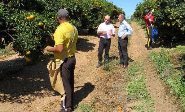 La campaña de producción y la recolección de cítricos en Huelva genera hasta 14.000 empleos