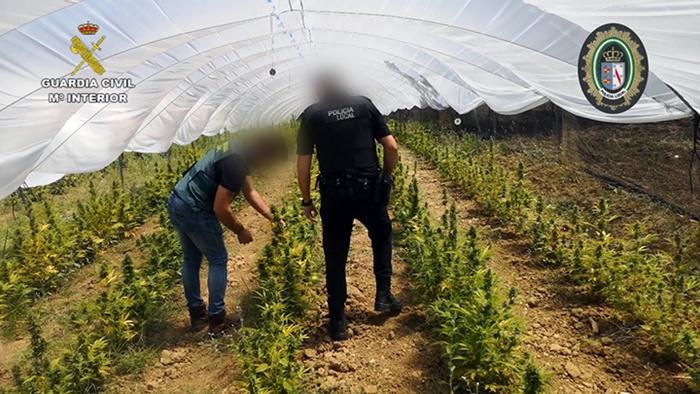Detenidas cuatro personas en una operación contra el cultivo de marihuana en Almonte