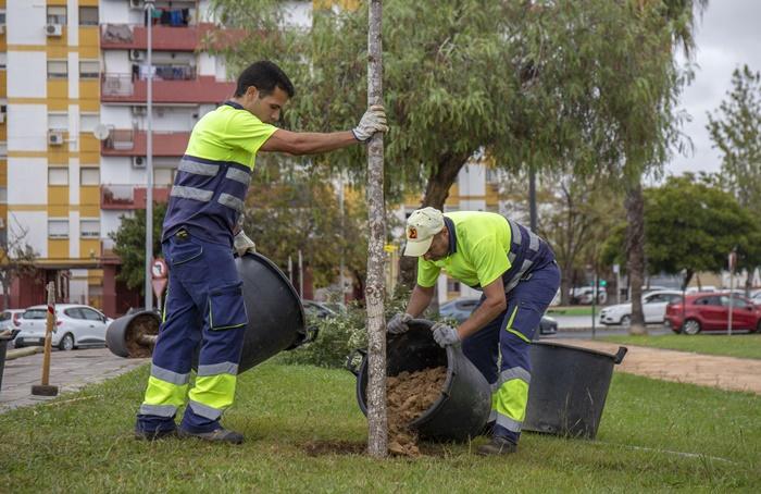 Adelanto en la Campaña de Plantación con la siembra de 1.000 flores de temporada en la calle San Sebastián