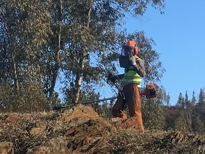 Valverde del Camino dedica un programa de fomento al empleo a la protección de sus montes