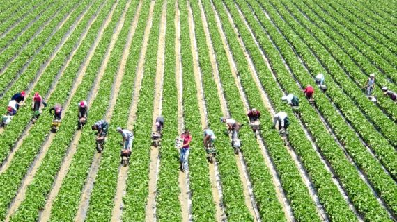 CR Palos celebra dos décadas de vanguardia al servicio de los agricultores del entorno