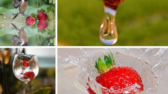 Arranca el concurso de fotografía de CR Palos sobre el agua y los frutos rojos