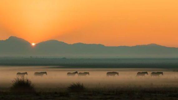 'Mesteño', el documental rodado en Hinojos, gana el Festival Equus de EEUU