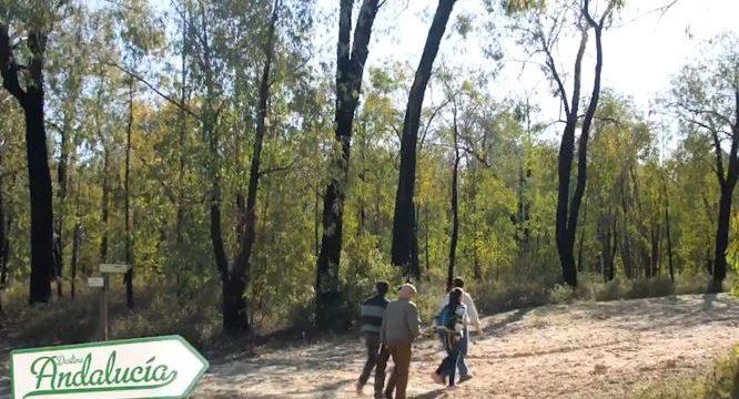 Canal Sur recomienda una visita turística al Arboreto del Villar de Bonares