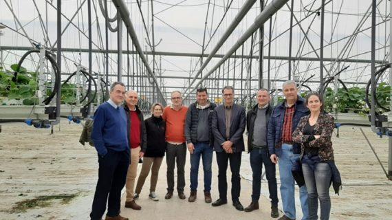 El sector prevé la estabilización de la superficie de cultivo de fresa en esta campaña