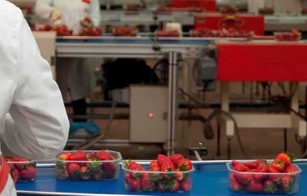 CSIF-A pide protección inmediata para las trabajadoras y trabajadores del manipulado de alimentos
