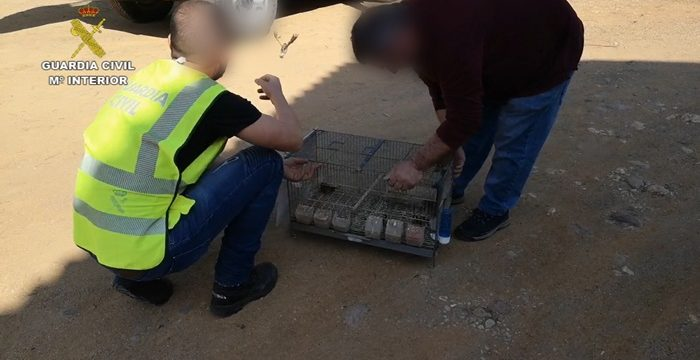 Intervenidas un total de 30 aves fringílidas que habían sido capturadas ilegalmente en Gibraleón