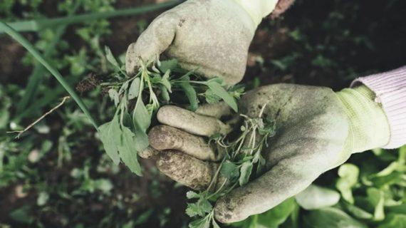 El Ayuntamiento de Almonte publica en cuatro idiomas instrucciones para trabajadores agrícolas