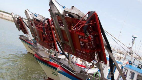 Ampliadas las especies marisqueras que se pueden capturar en zonas de Huelva